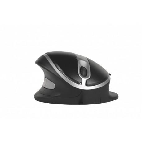 Oyster Mouse - Souris confort sans fil
