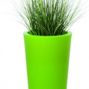 plante-papyrus-du-nil-bac-vert