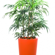plante-bambou-bac-orange