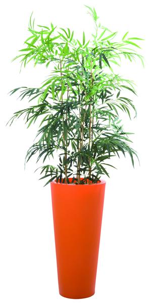 Plantes mobilier bureau for Plante orange